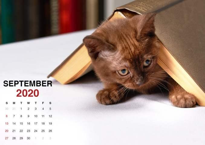 kitten wallpaper for september 2020 calendar2