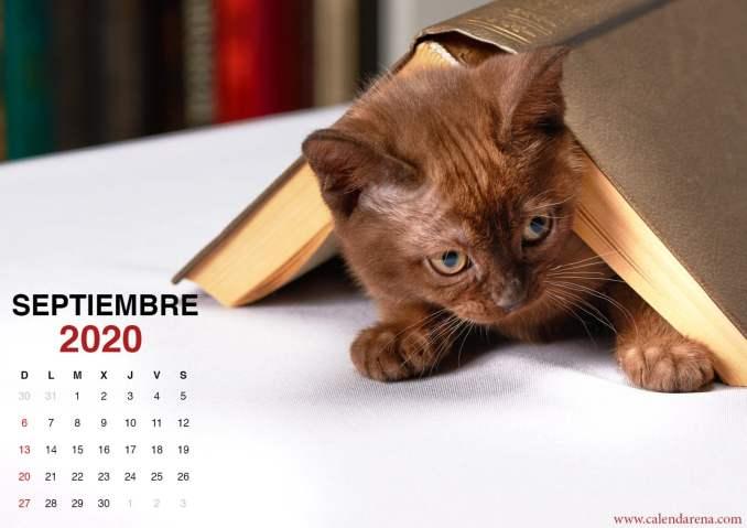 wallpaper de gatito para el calendario de septiembre de 2020_1