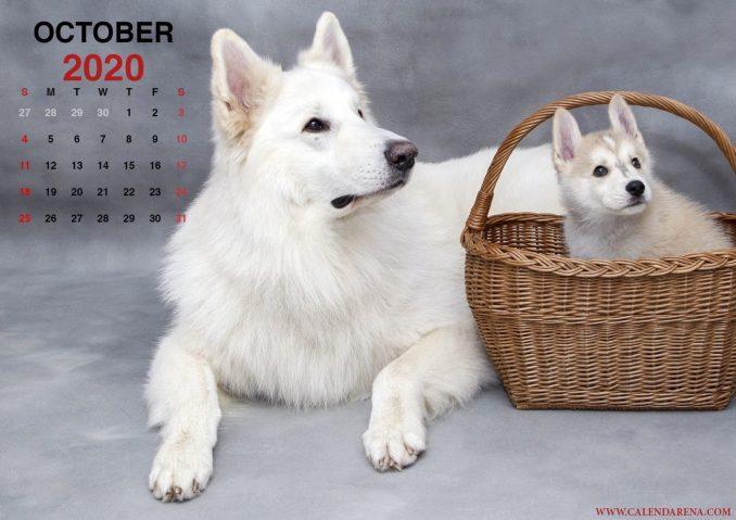Calendar October 2020 to print_en