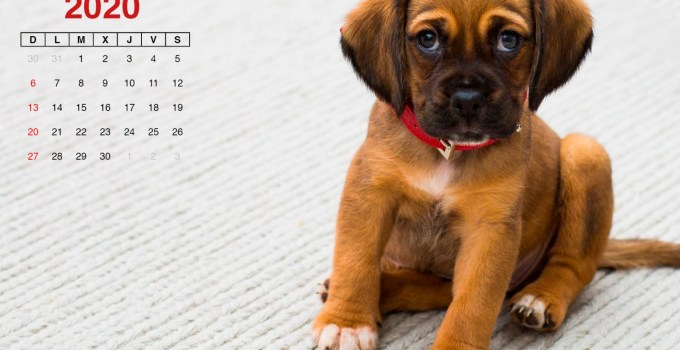 Calendario septiembre 2020 perrito