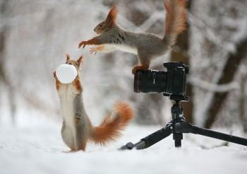calendrier lunaire fevrier 2016 - ecureuils qui jouent
