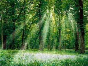 calendrier lunaire nature sylviculture forêt