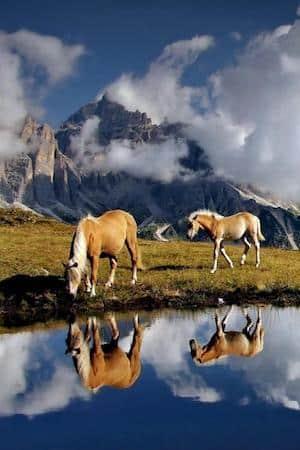 calendrier lunaire du 18 au 19 février nature animaux chevaux