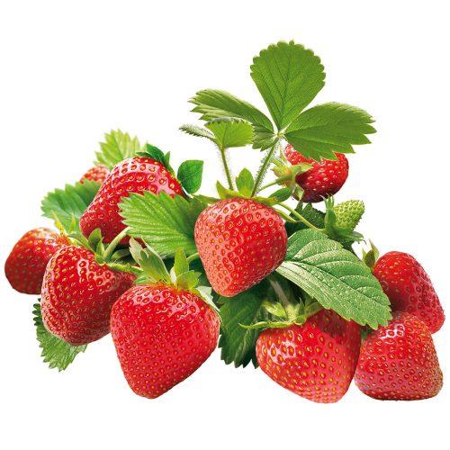 calendrier-lunaire.info fraises Erdbeere fraisiers