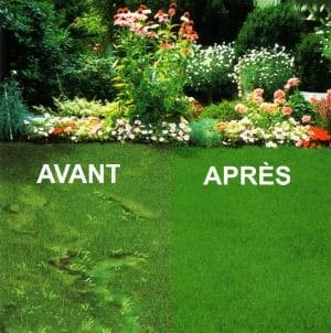 calendrier lunaire entretien pelouse