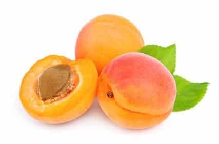 calendrier lunaire abricotiers