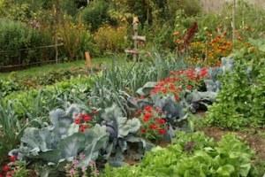 calendrier lunaire - jardiner avec la lune 2021 - juillet