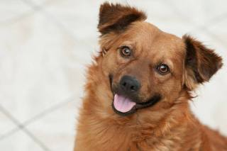happy-dog-face-calgary-dog-publications
