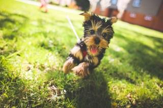 dog-image-calgary-dog-life-happy-dog-running
