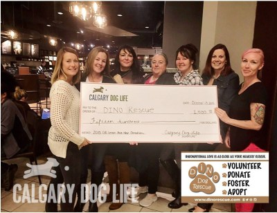 calgary -dog-rescue-donations-calgary-dog-life