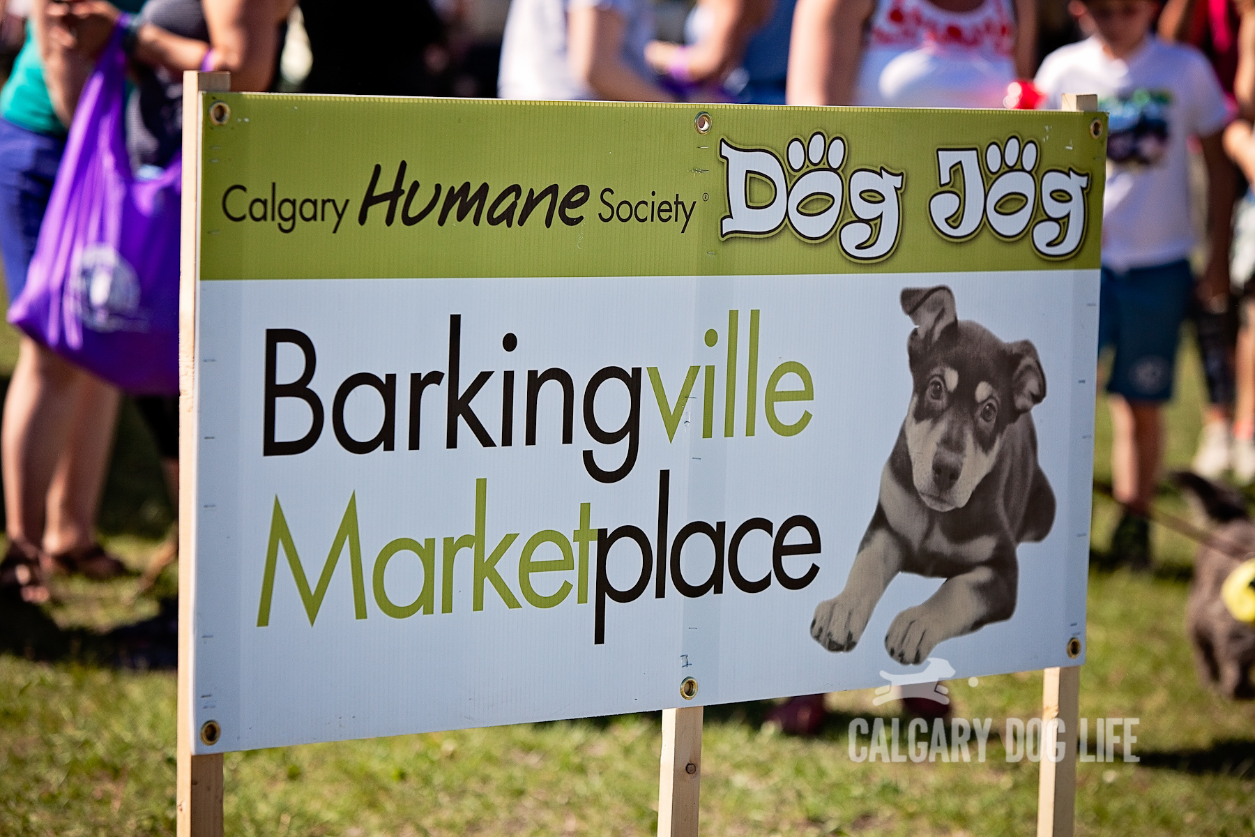 Calgary Dogs Break A World Record!