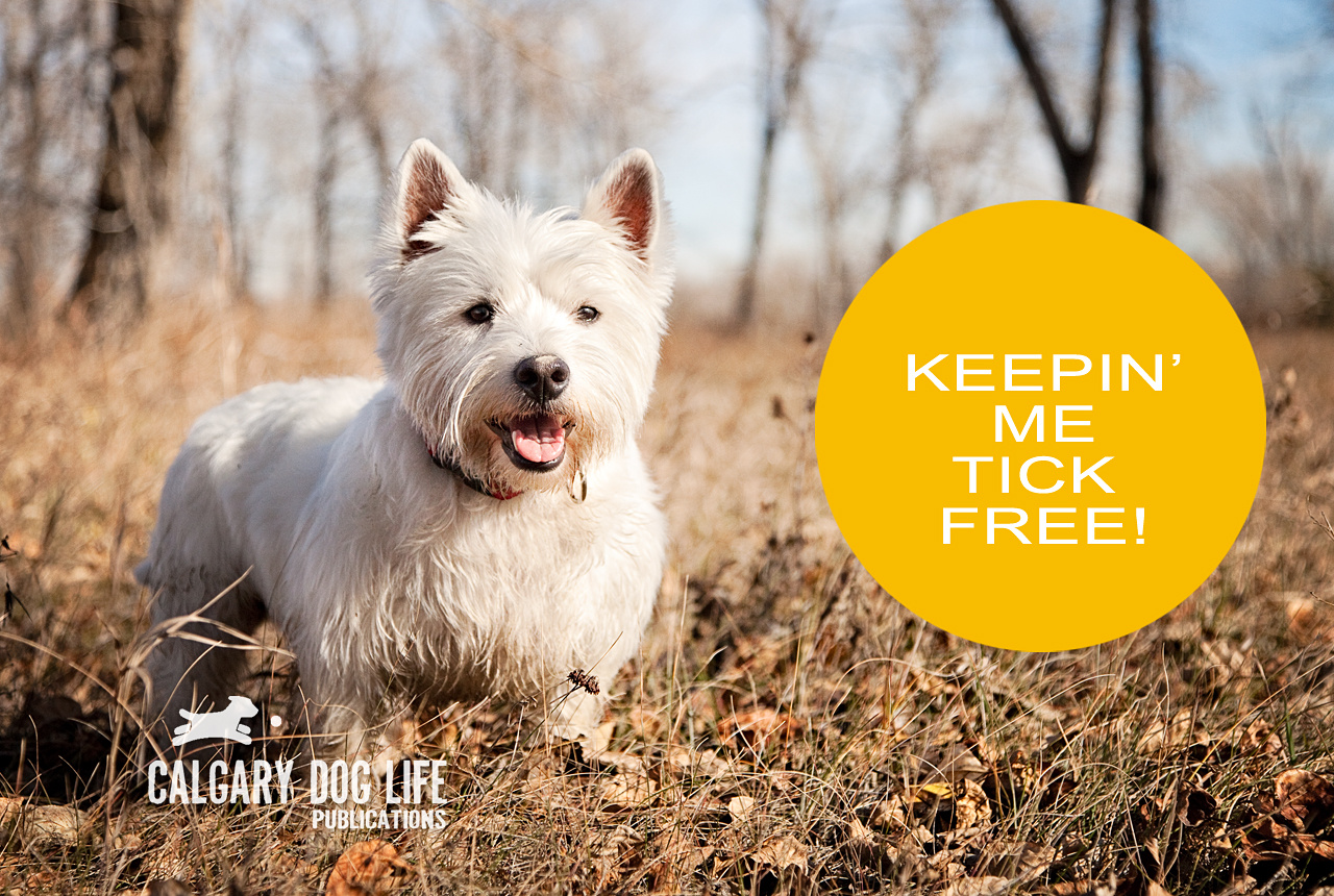 Tick Tips To Keep Your Dogs Safe
