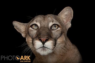 120330 Lowry Park Zoo 48985 3