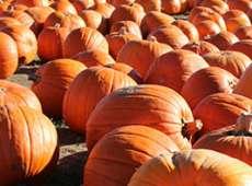 thumb PumpkinPalooza