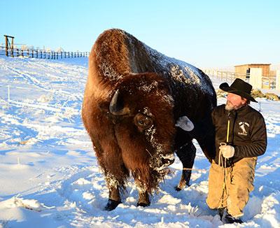 DEWEY buffalo final