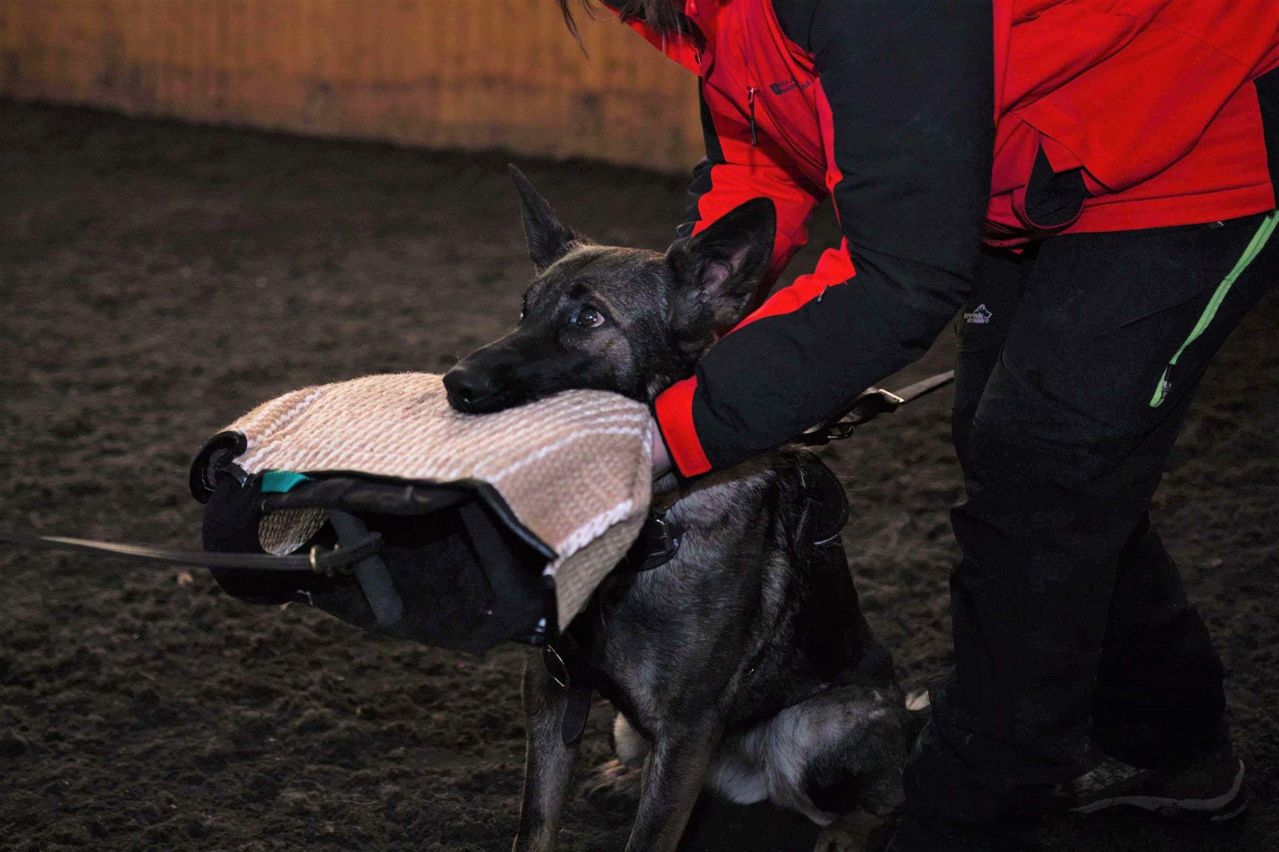 Schutzhund 3 1 copy
