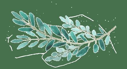 imagen de hojas del arbol