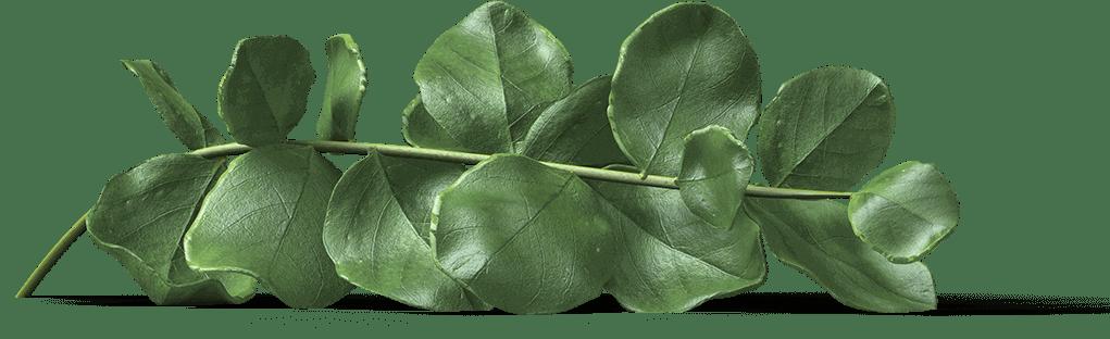 hojas juntadas para decoracion