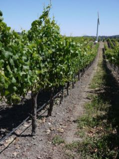 SLO Wine Country's Roll Out the Barrels