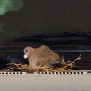 38smiles bird