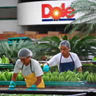 Dole employees