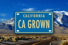 CA Grown campaign logo