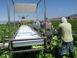 Fresh Harvesting and Packing Co Relies on H-2A Workers