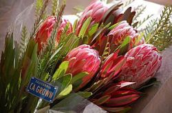 California Leads Nation in Floriculture Production – From the USDA's National Agricultural Statistics Service