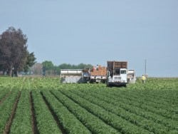 Farm employment: Drought impact adds uncertainty to hiring outlook