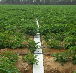 Netafim Rolls Out Portable Drip Irrigation Technology