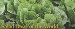 Salad Bowl of the World