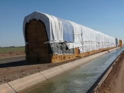 RAIN Damages Alfalfa; Benefits Wheat