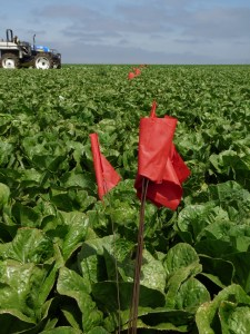 fsma food safety flags in the field mean stop harvest here