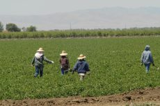 farmworkers social security number