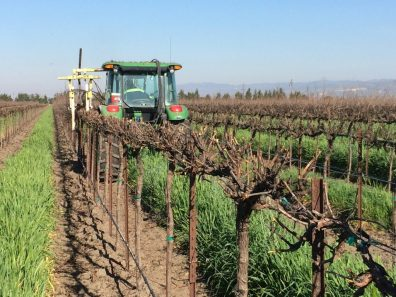 Mechanical Box Pruning on Winegrapes