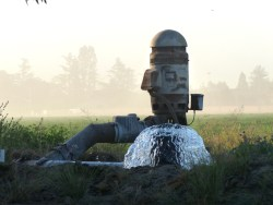flood-irrigation-pump Nitrates water