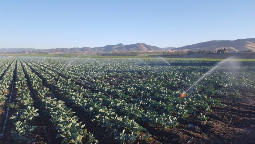 Irrigated Field in Salinas, groundwater