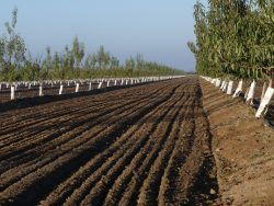 soil in CA almond orchard, CV-Salts