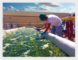 microalgae Pond, Heliae Development, LLC.
