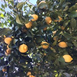 Citrus Referendum Coming Up