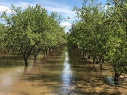 Irrigation Improvement Continuum Part of Almond Board's CASP