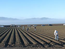 Chlorpyrifos Under More Scrutiny in California