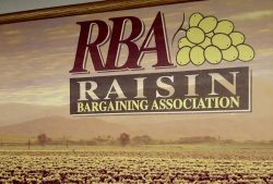 Raisin Growers Having a Tough Year