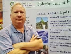 Pierce's Disease Research Advancing