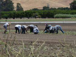 Specialty Farms Grow for A Diverse Customer Base