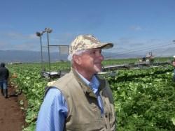 Labor Contractor Fresh Harvest Deep in Vegetable Harvests