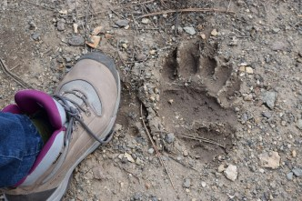 Mom's boot next to a bear print