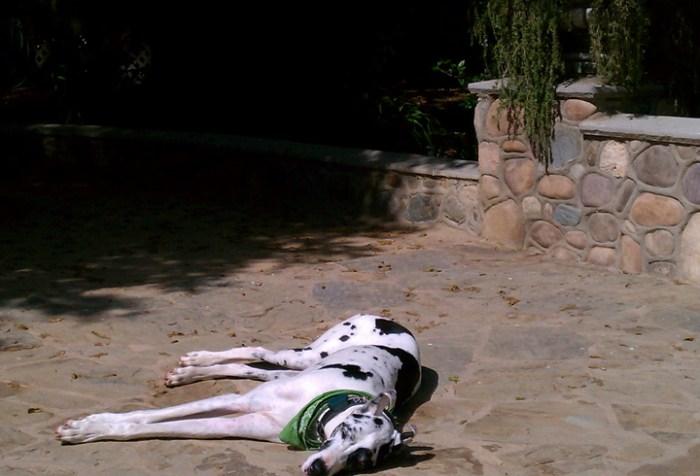 wine dog enjoying sunlight orange county winery giricci