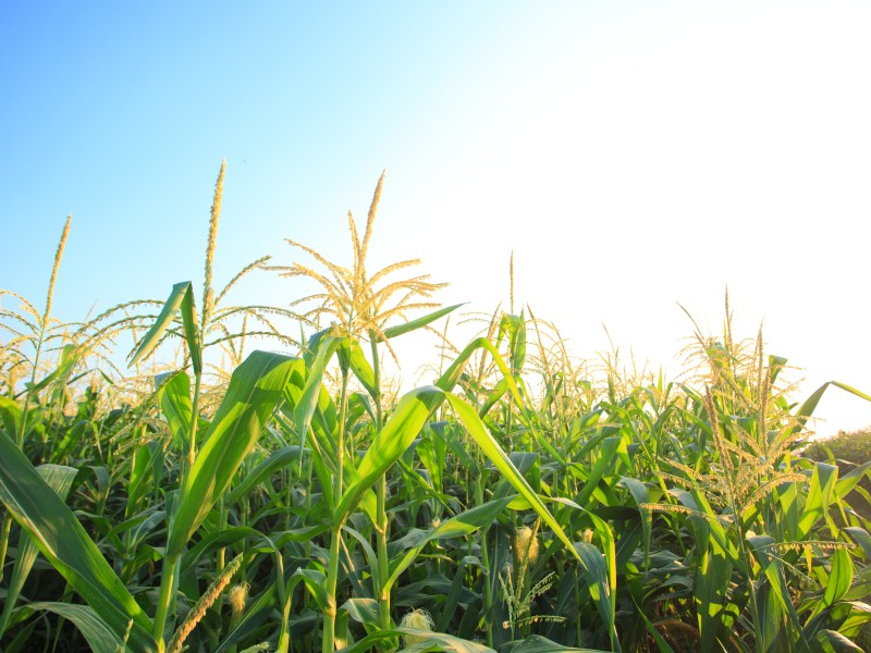 NFU Applauds Year-Round Use E15, Urges Further Investments in Biofuels