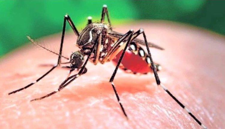 160128185001-zika-mutant-male-mosquitos-mclaughlin-pkg-00020830-exlarge-tease-e1497556182757.jpg